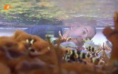 Blick durch ein Aquarium